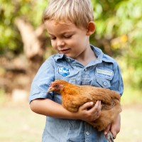 gallery_chooks