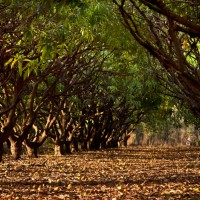 gallery_tree-rows
